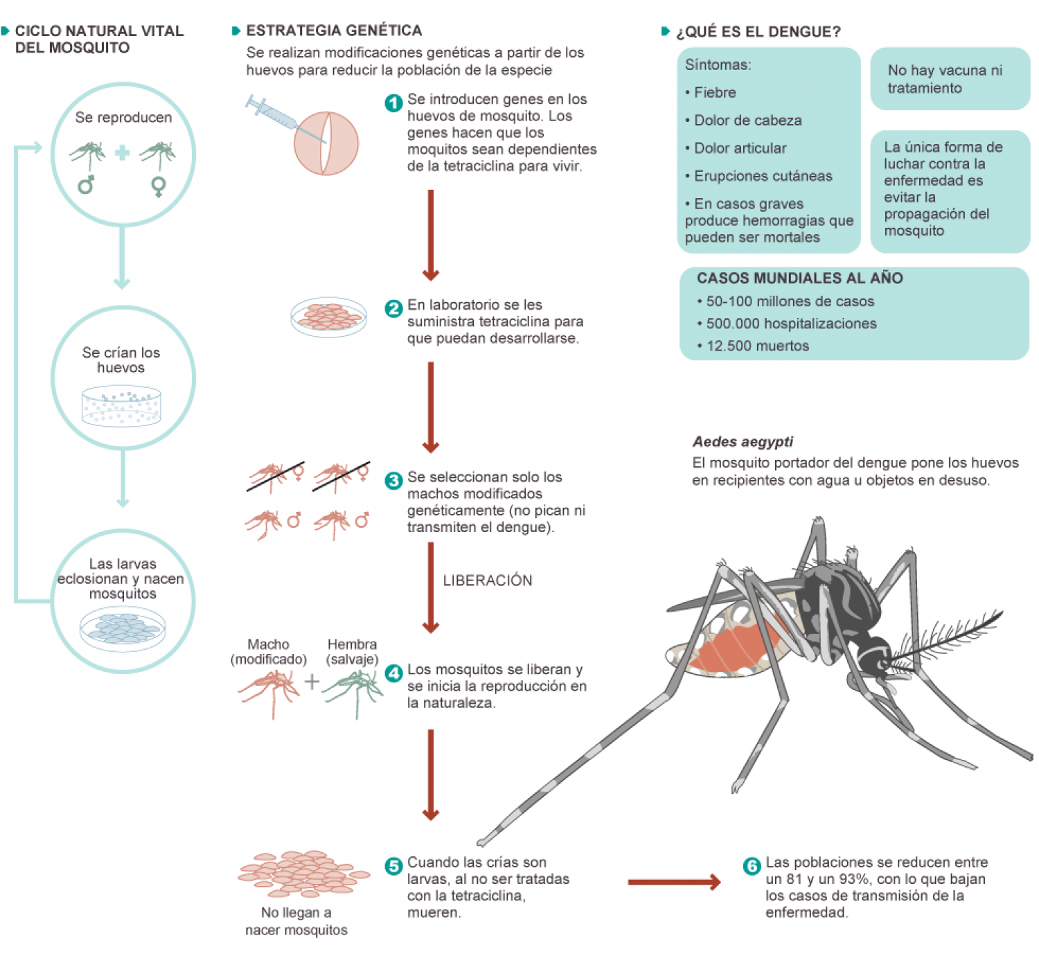 mosquito and dengue vector control Journal of the american mosquito control association, 16(2):93-99,200o  both  inside and outside the household, but after the integrated control, aedes.