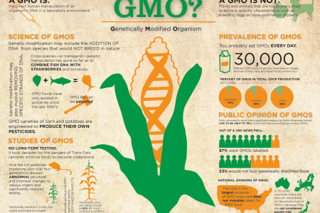 GMO? Genetically Modified Organism Infographic