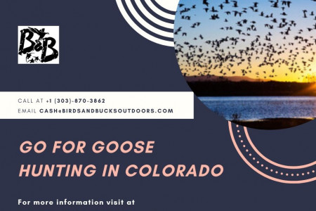 Go for Goose Hunting in Colorado Infographic