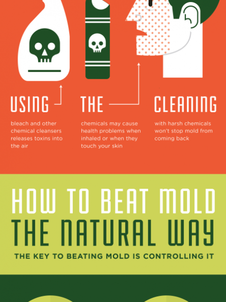 Green Solutions for Mold Removal Infographic