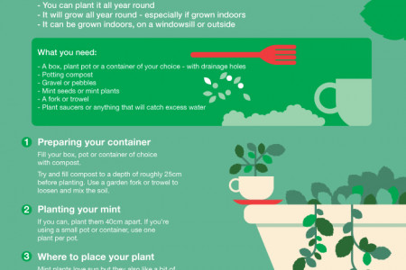Grow Your Own Mint Infographic