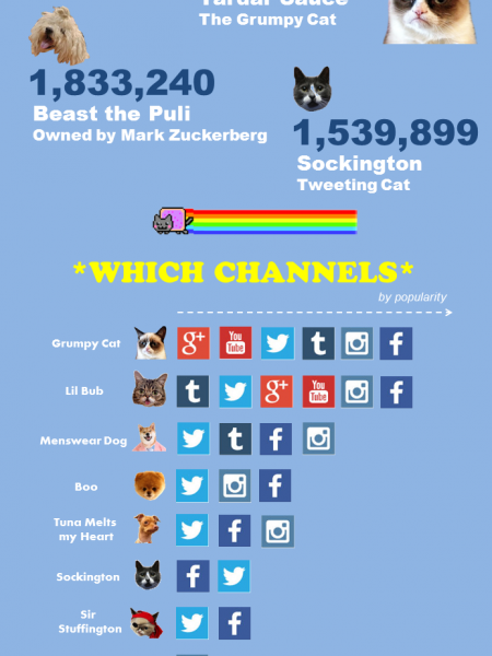 The Ultimate Internet Pet Showdown Infographic