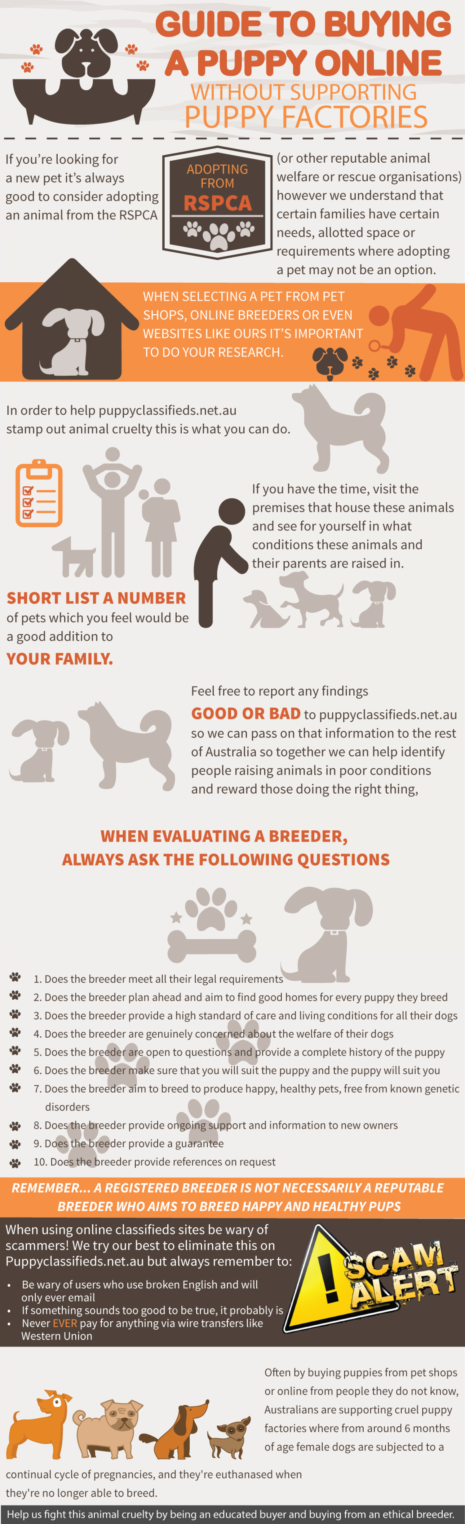 Guide to Buying a Puppy Online Without Support Puppy Factories  Infographic