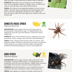 Common House Spider Bites Pictures