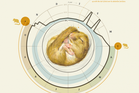 Hazel Dormouse Infographic
