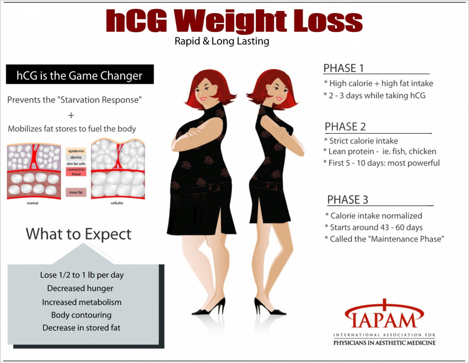 hcg Weight Loss Infographic