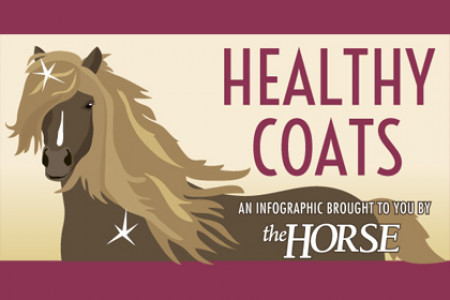 Healthy Coats for Horses Infographic