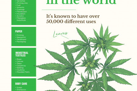 Hemp is the Strongest Natural Fibre in the World Infographic