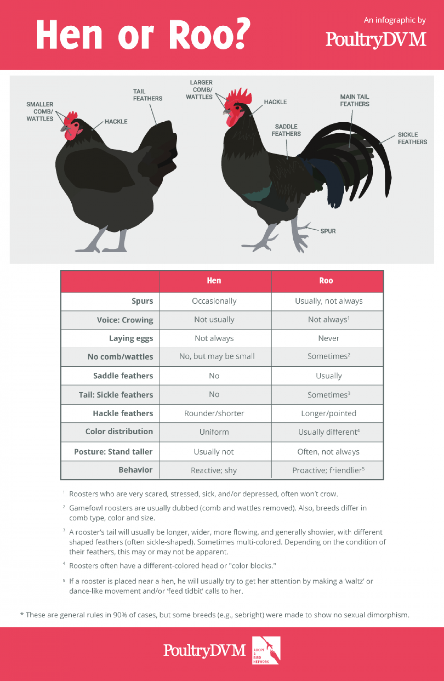 Hen or Roo? Infographic