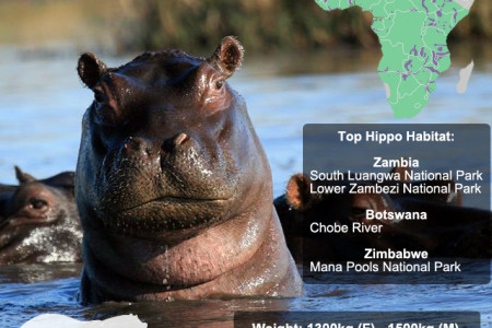 Hippopotamus Snap Facts Infographic