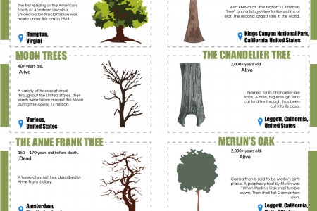 Historic and Notable Trees Around the World Infographic