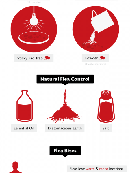 Home Flea Control Infographic