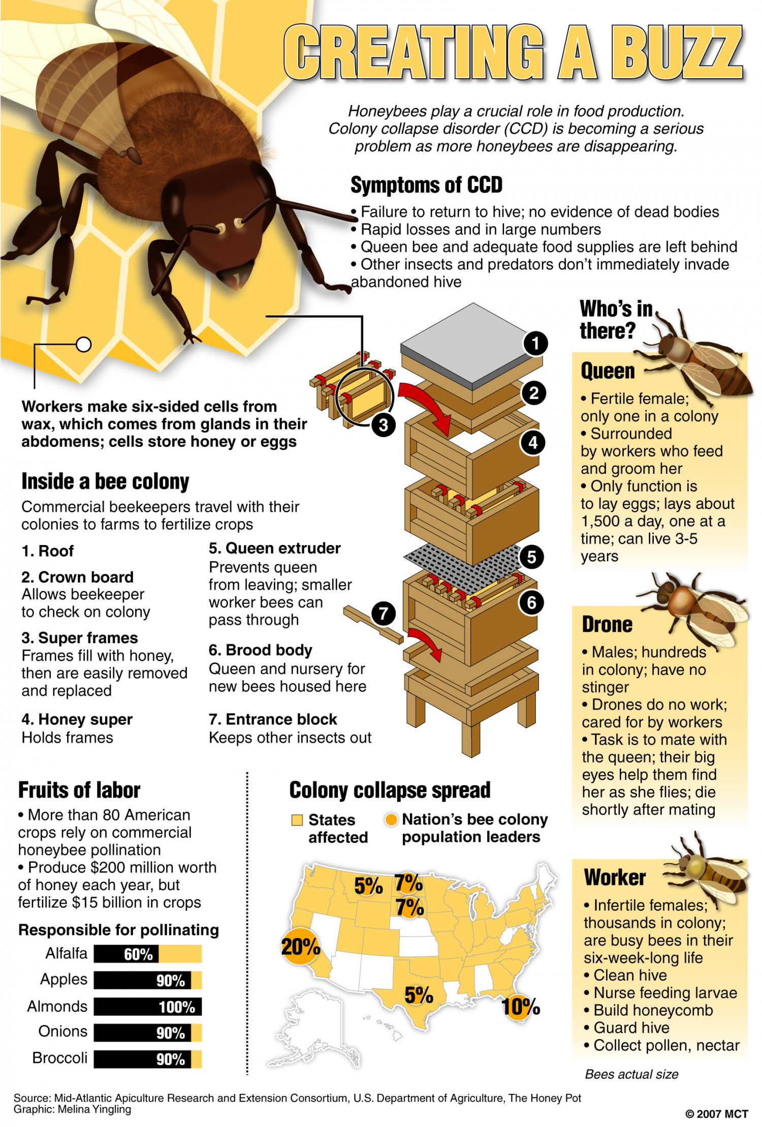 Creating a Buzz Infographic
