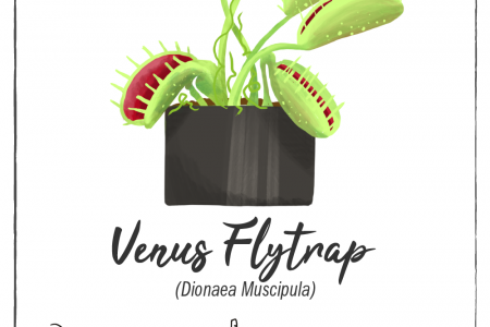 Houseplants with Superpowers - Venus Fly Trap Infographic