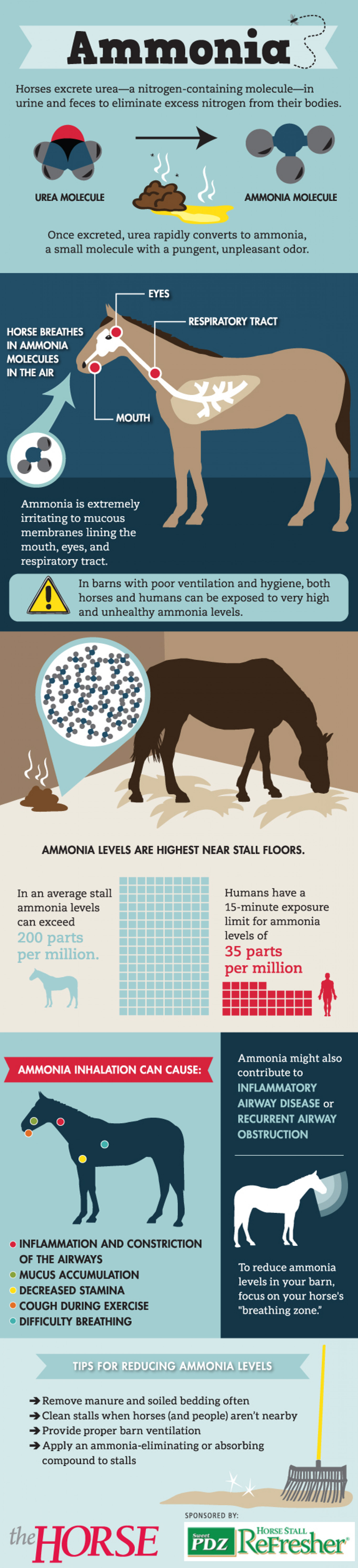 How Ammonia Impacts Your Horse Infographic
