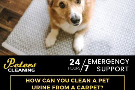 HOW CAN YOU CLEAN PET URINE FROM A CARPET? Infographic