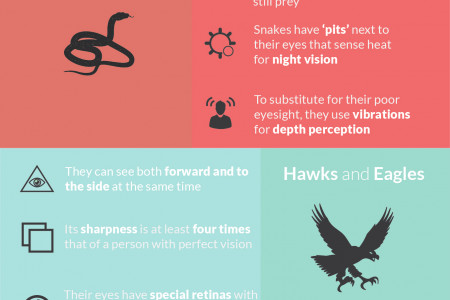 How Different Species Use Their Eyes Infographic