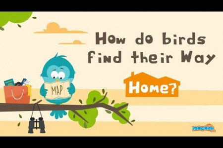How Do Birds Find Their Way Home? Infographic