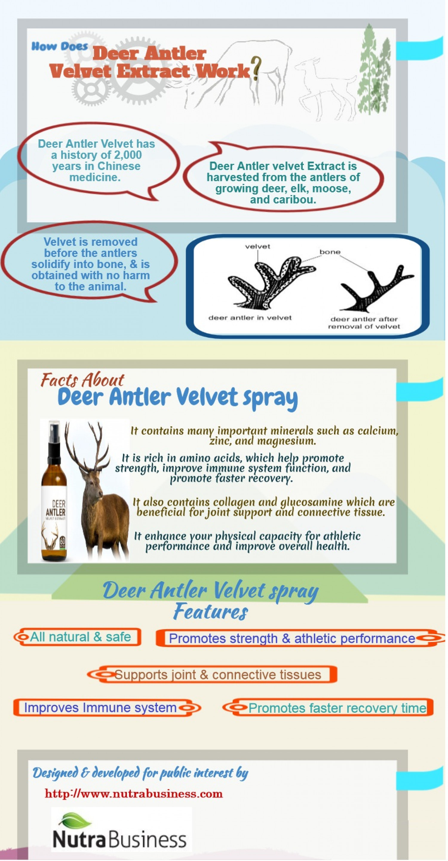 How does Deer Antler Velvet Extract Works ? Infographic