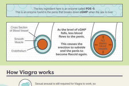 How does Viagra work? Infographic