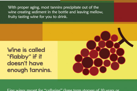 How Long Should You Store Your Wine Infographic