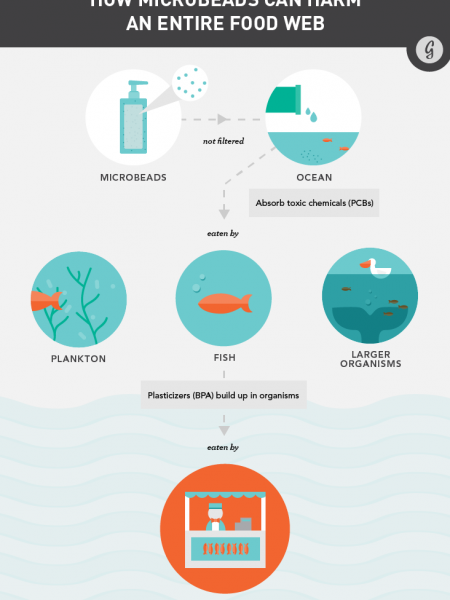 How Microbeads Can Harm An Entire Food Web Infographic
