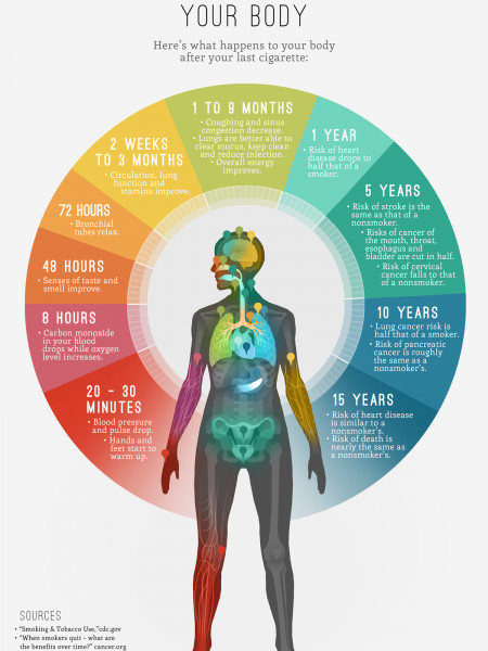 How Quitting Smoking Changes Your Body Infographic