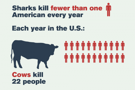 How Scared Should We Be of Sharks? Infographic