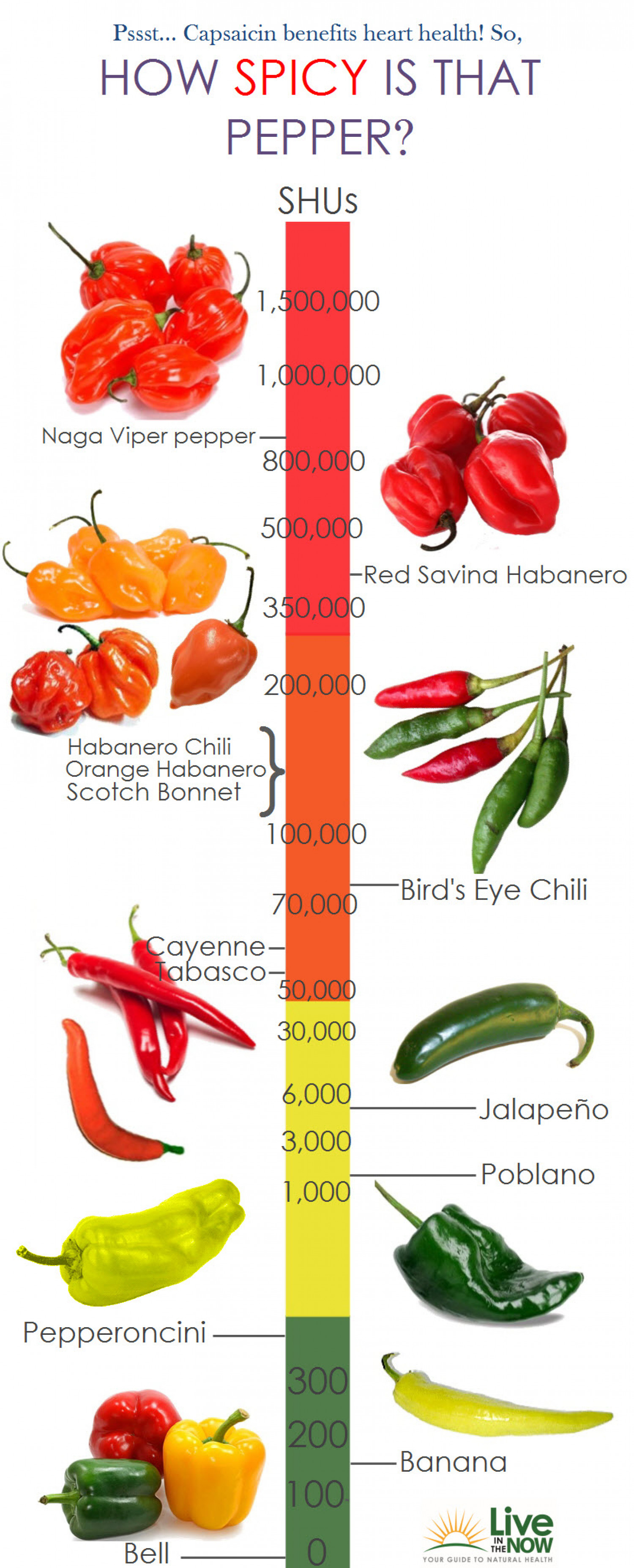 How Spicy Is That Pepper Infographic
