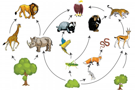 How the food chain works Infographic