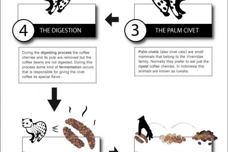 How the world's most unusual coffee is made! Infographic