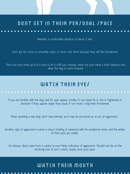 How to Approach a Dog Infographic