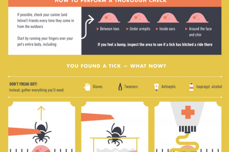 How to Check For & Remove Ticks from Dogs & Cats Infographic