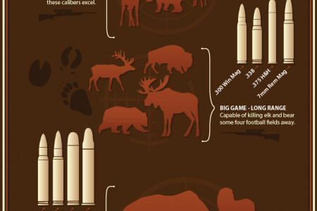 How to Choose the Right Caliber  Infographic