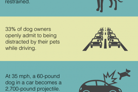 How to Drive Safely With 'Man's Best Friend' In the Passenger Seat Infographic