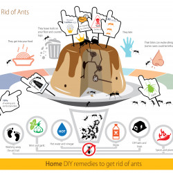 how to kill ants essay Fire ant is the common name for several species of ants in the genus solenopsis they are, however,  fire ants often attack small animals and can kill them.