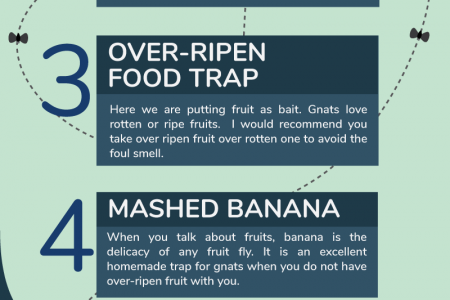 How to Get Rid of Fruit Flies & Other Gnats? – 4 Home Remedies Infographic
