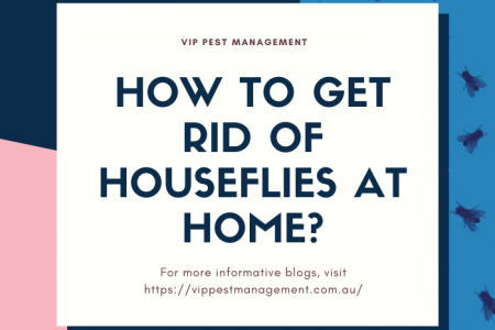 How to Get Rid Of Houseflies At Home?  Infographic
