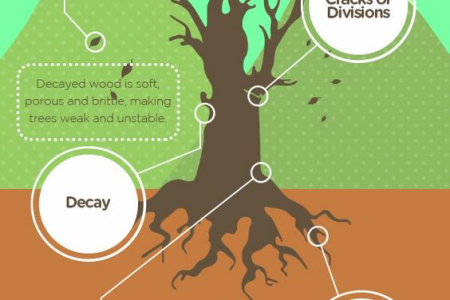 How to Identify Warning Signs from Trees Infographic