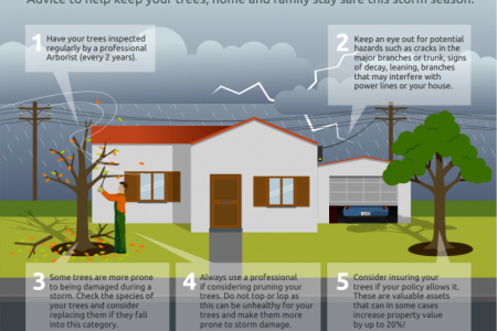 How to Prepare your Trees for Storm Season Infographic