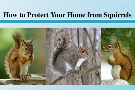 How to Protect Your Home from Squirrels Infographic