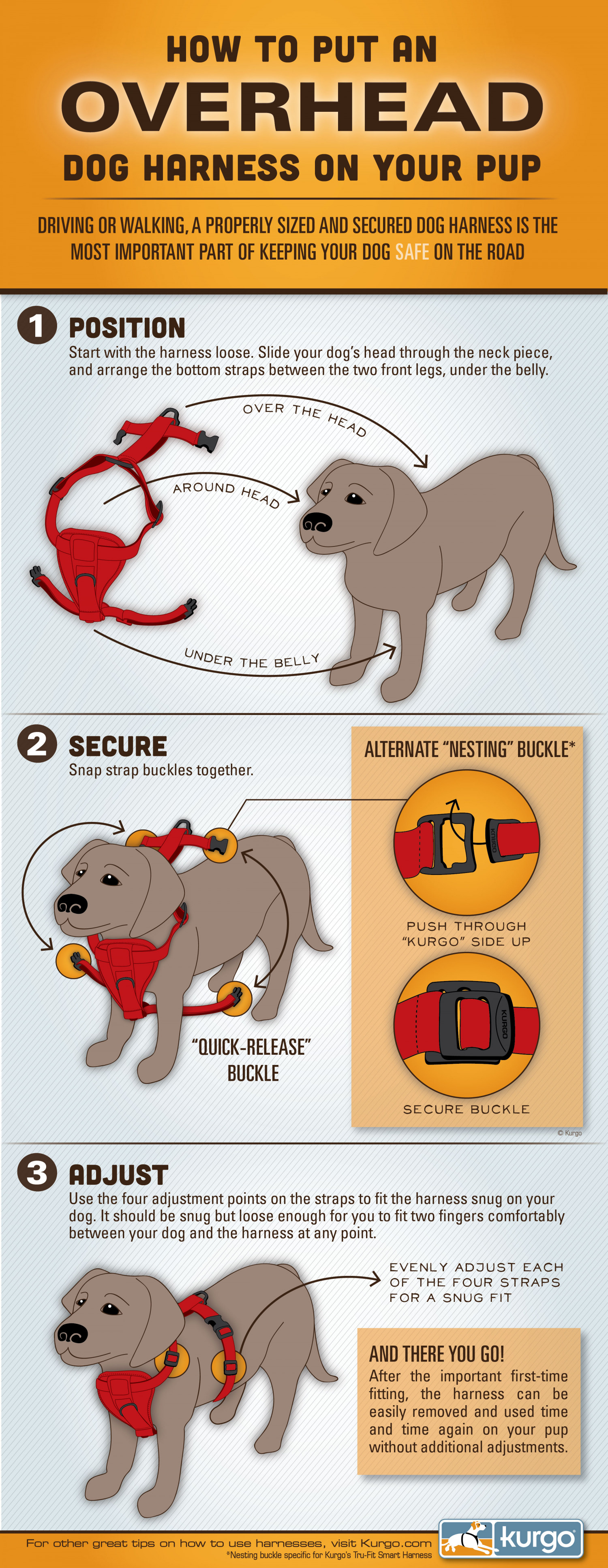 How to Put on a Dog Harness  Infographic