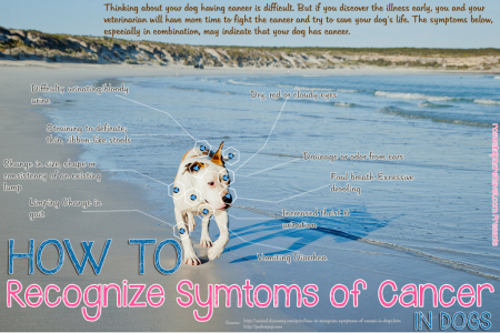 How to recognize Symtoms of Cancer: Dogs Infographic
