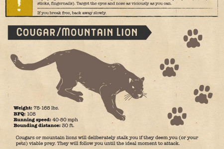 How to Survive an Animal Attack by North America's Primary Predators Infographic