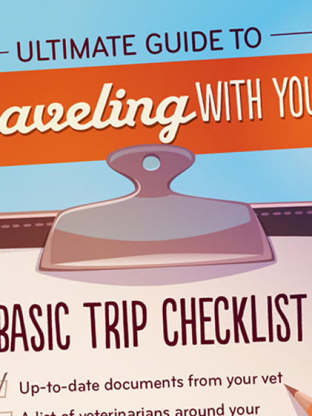 How to Travel with Your Dog without Going Completely Insane Infographic