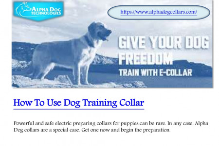 How to use dog training collar Infographic