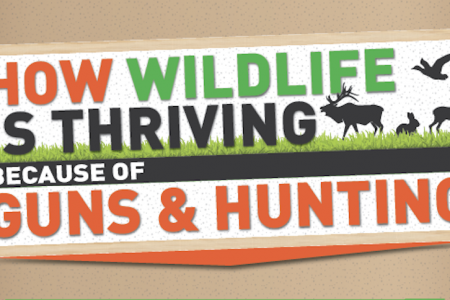 How Wildlife is Thriving Because of Guns & Hunting - 2021 Version Infographic