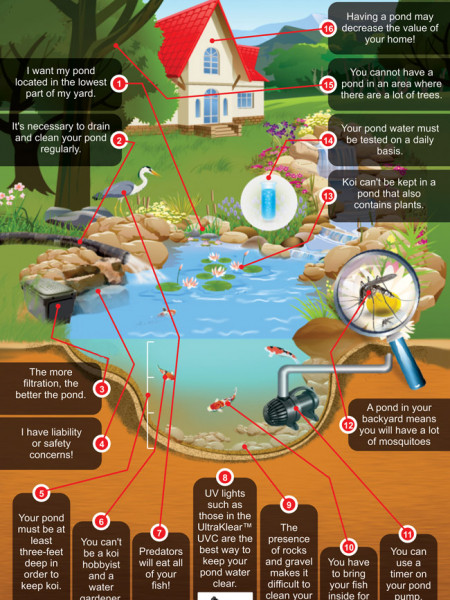 16 Common Pond Myths Infographic