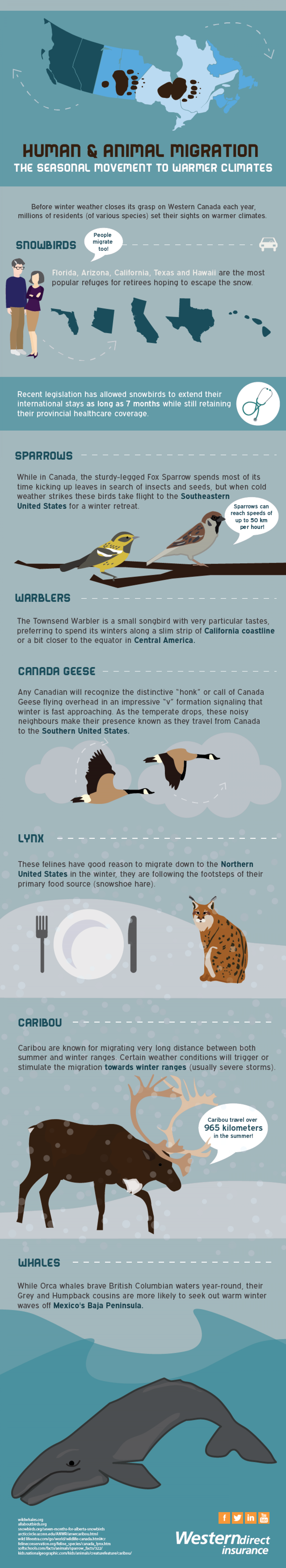 Human & Animal Migration Infographic