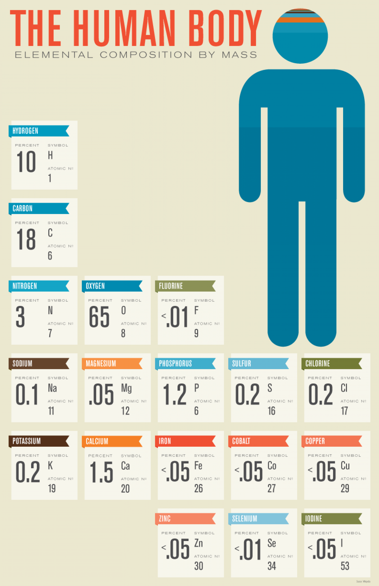 Human Body Composition Infographic